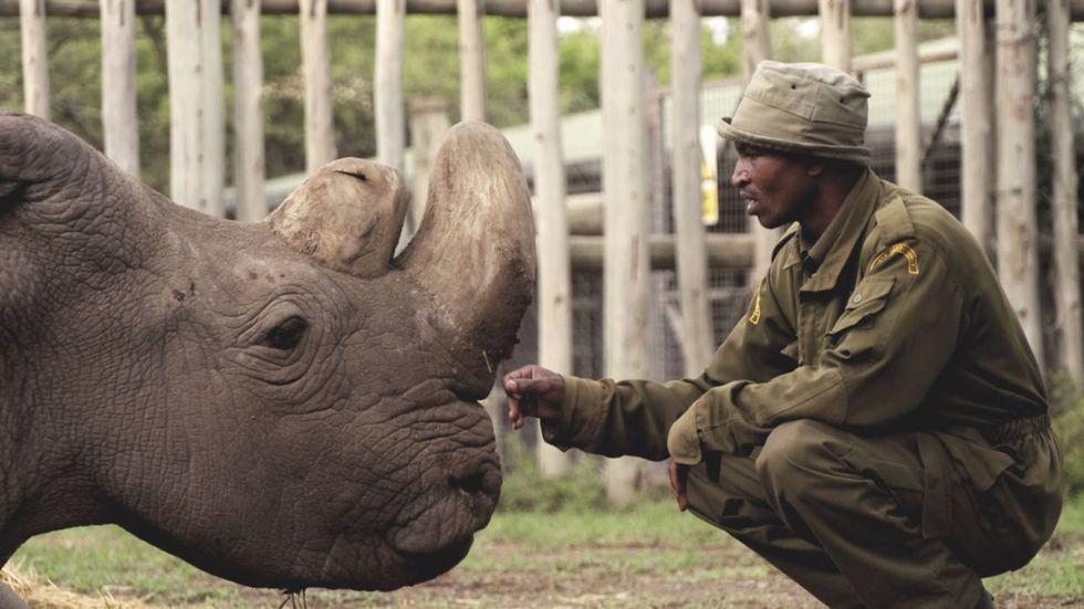 Sudan the northern white rhino has died