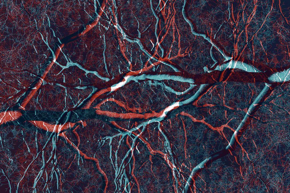 Trees or veins? (Photo: Credit: Carlos ZGZ / Flickr)
