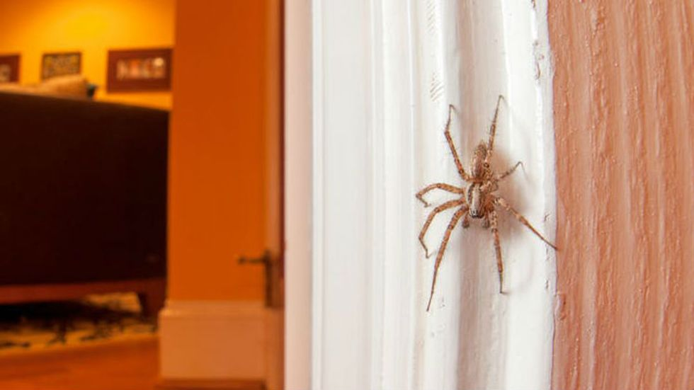 Should I kill spiders in my home? An entomologist explains why not to.