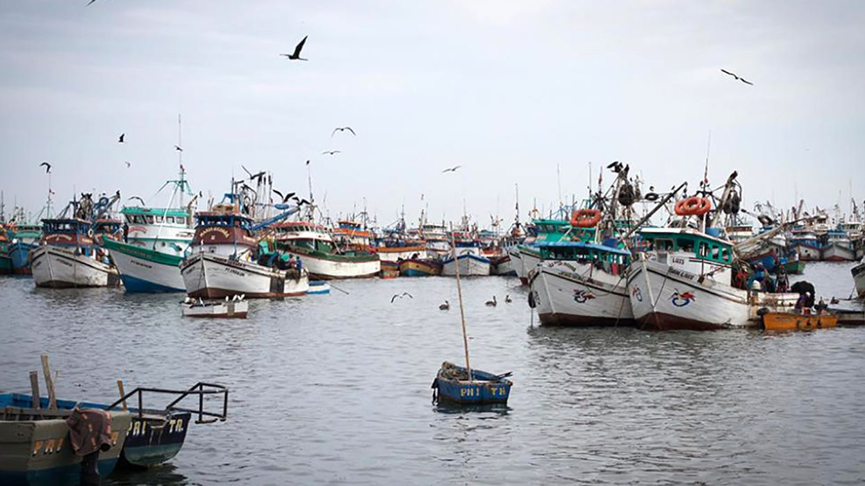For Thousands of Peruvian Families, the Road Out of Poverty Is Paved in Squid