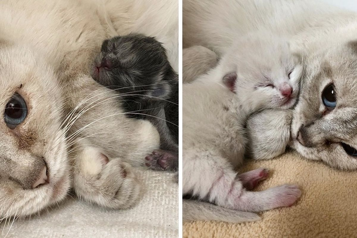 Feral Cat Mom Takes in Orphaned Kitten and Finds Comfort in Her Babies