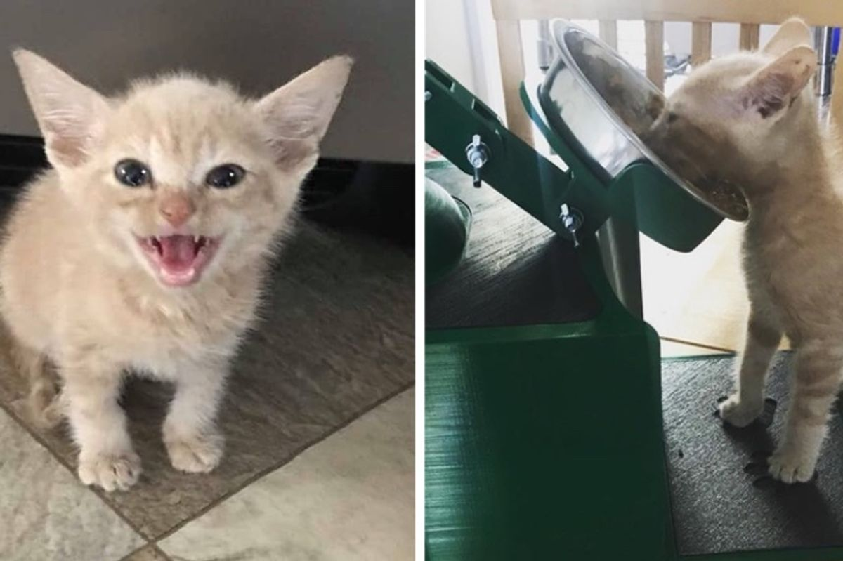 Kitten Couldn't Swallow Food So Man Built Him a Feeding Station