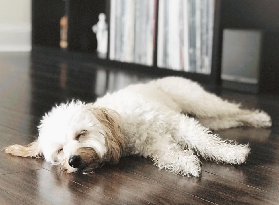 12 Easy Ways To Procrastinate If You Lack Inspiration