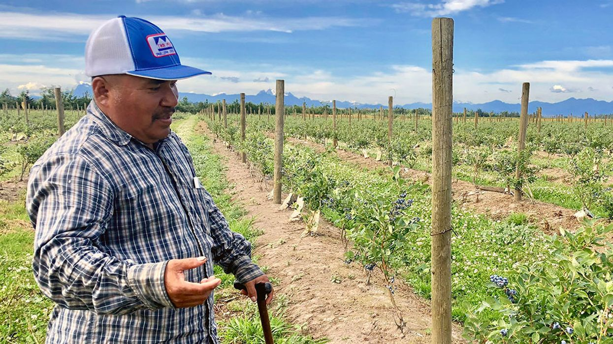 Berry Farmers Break Free From Big Agriculture