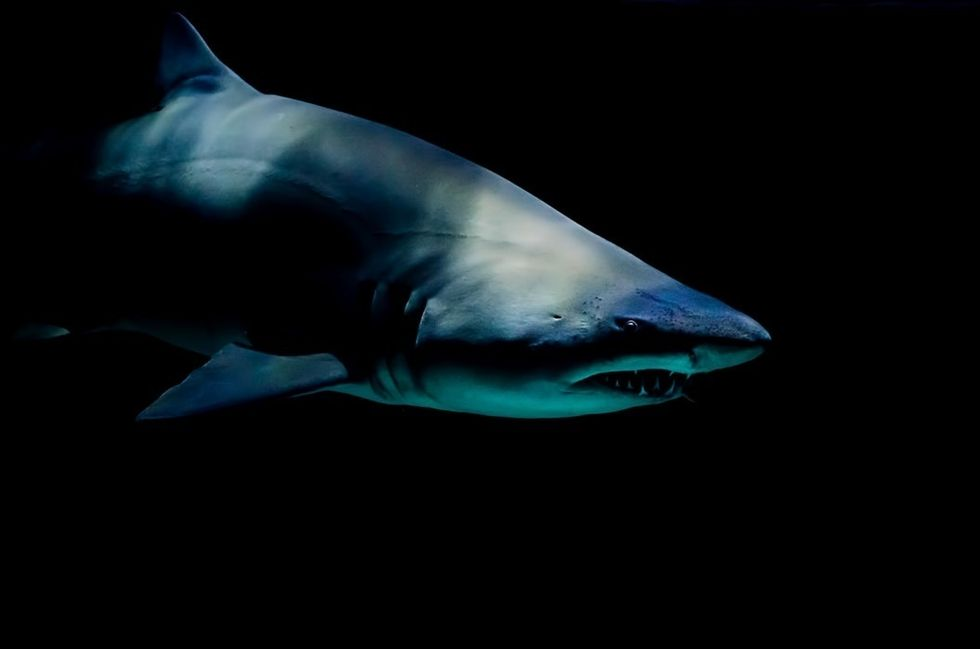 Jaws: More Than A Simple Shark Tale