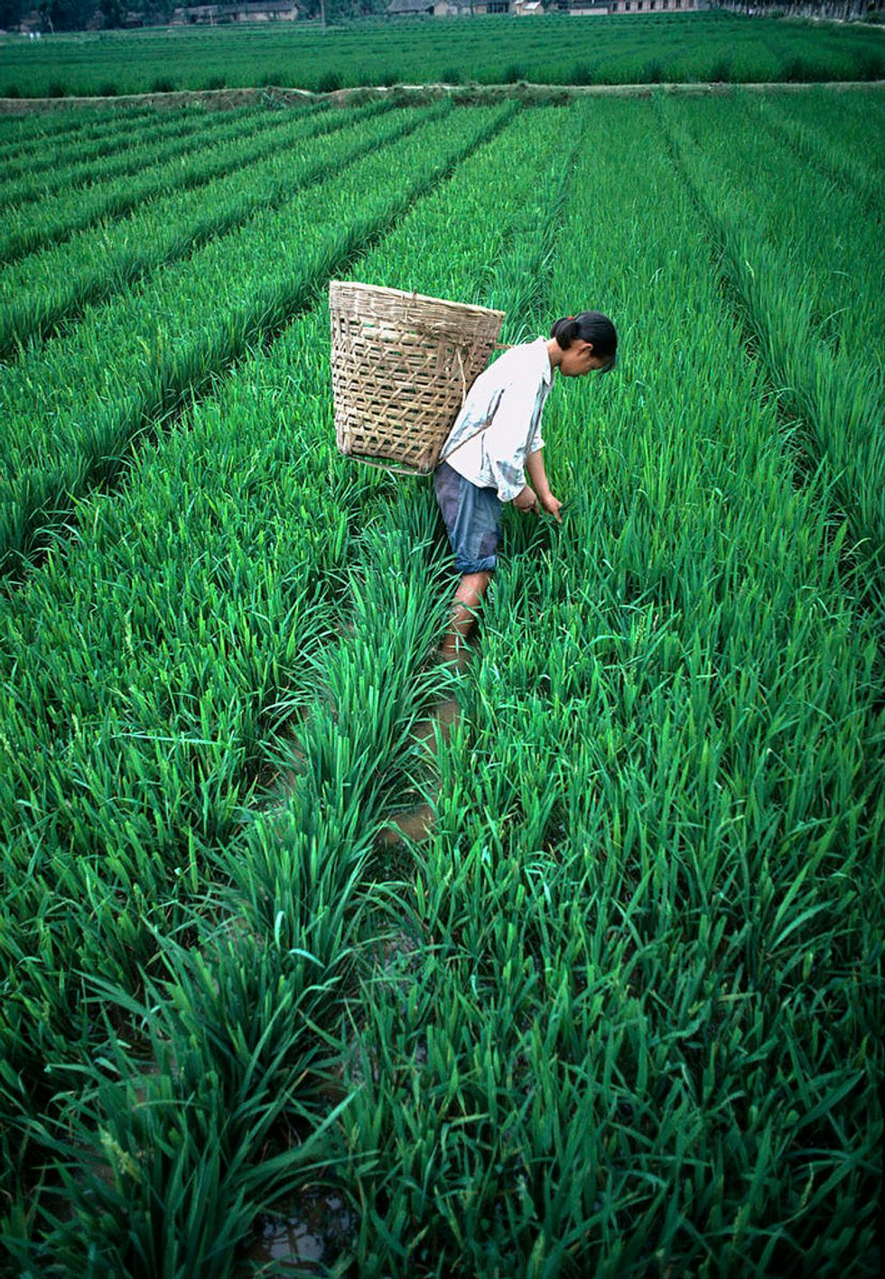 The Importance Of Elevator Pitches For Agricultural Development