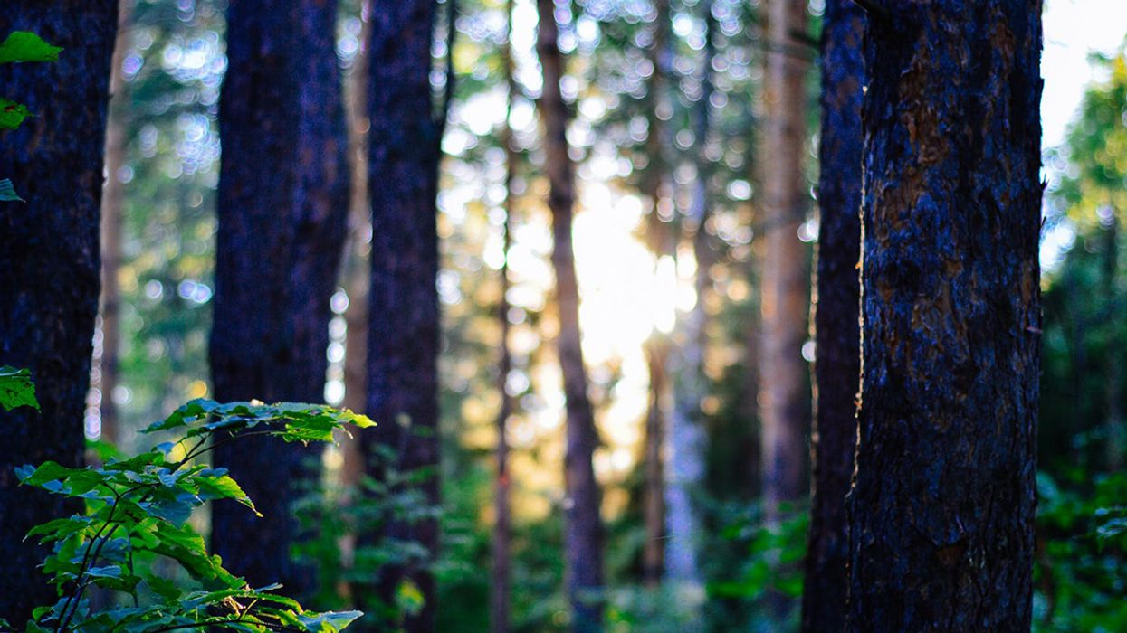 Trees Are Migrating West to Escape Climate Change