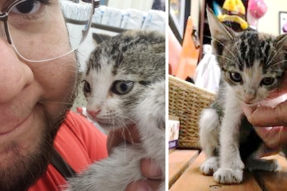 Kitten Who Was Abandoned at Store, Thinks This Bearded Man is Her Mom