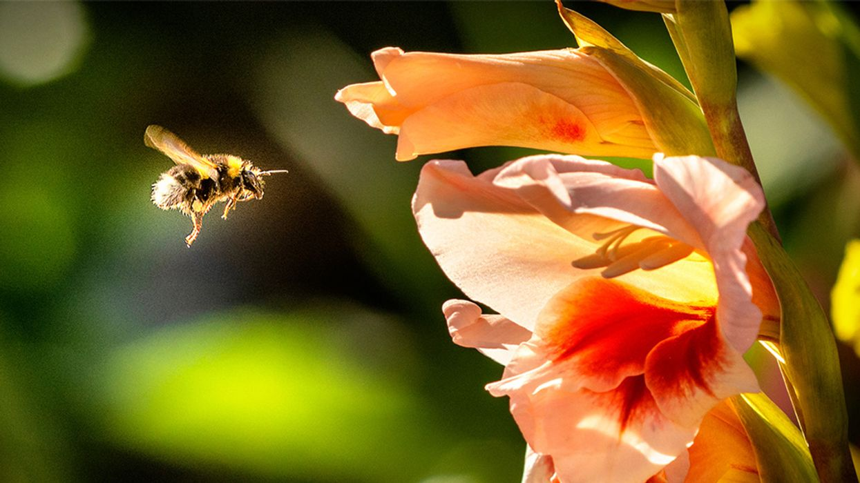 Pesticide Touted as Neonicotinoid Replacement Still Harms Bees