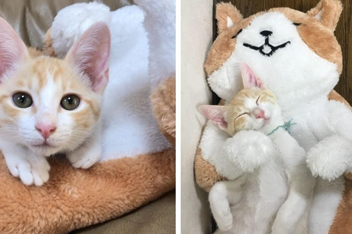 Orphaned Kitten Misses His Mom So They Give Him 'New Mom' to Cuddle With