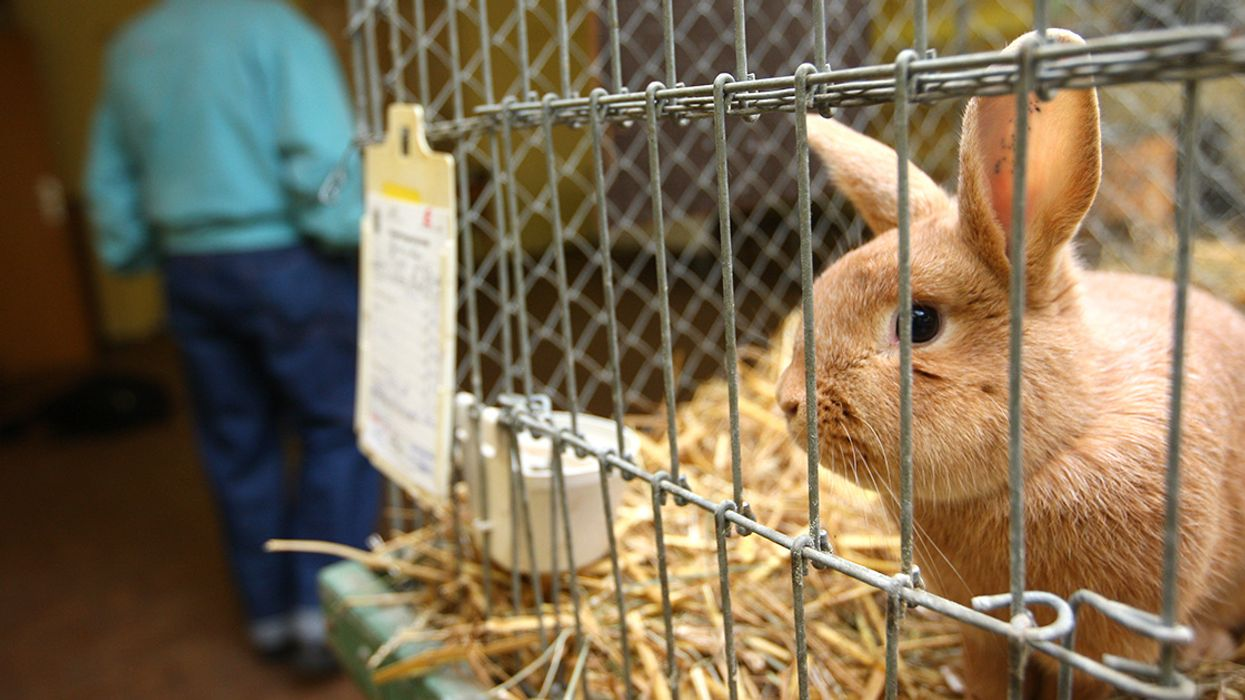 Bipartisan Group of Lawmakers Wants to End EPA's Cruel Animal Testing