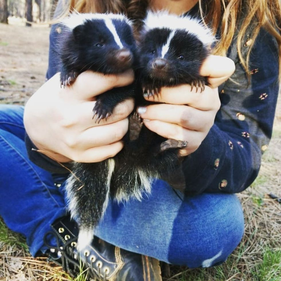 What I Learned From Finding Baby Skunks In The Forest