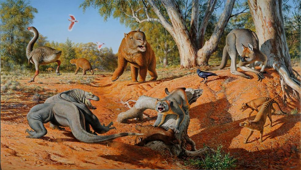Giant Australian Creatures, the Megafauna, Were Wiped Out By Humans, Not Climate Change