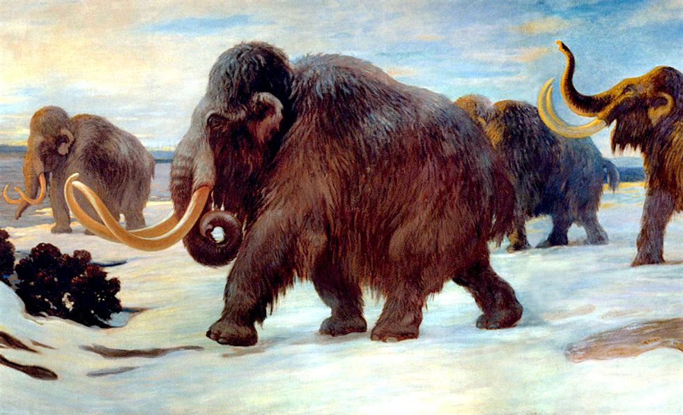 Prehistoric Woolly Mammoths About to Be Resurrected, Claim Harvard Scientists