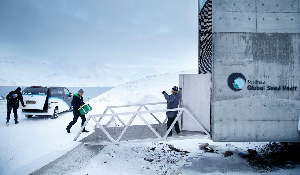 A man drops a precious parcel of seeds at the Svalbard Global Seed Vault (SGSV) in the Arctic. (Photo: JUNGE, HEIKO/AFP/Getty Images)