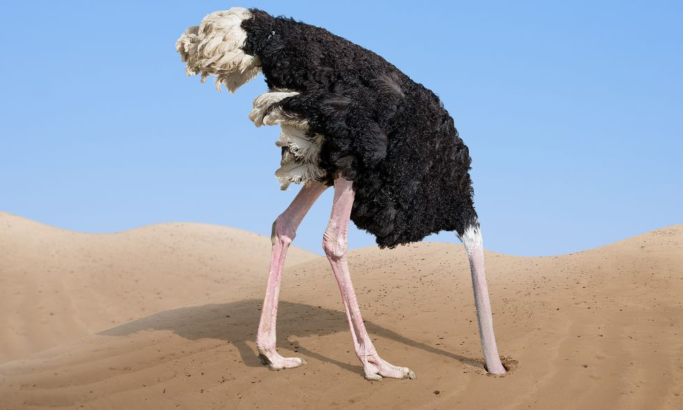 An ostrich with its head buried in the sand.