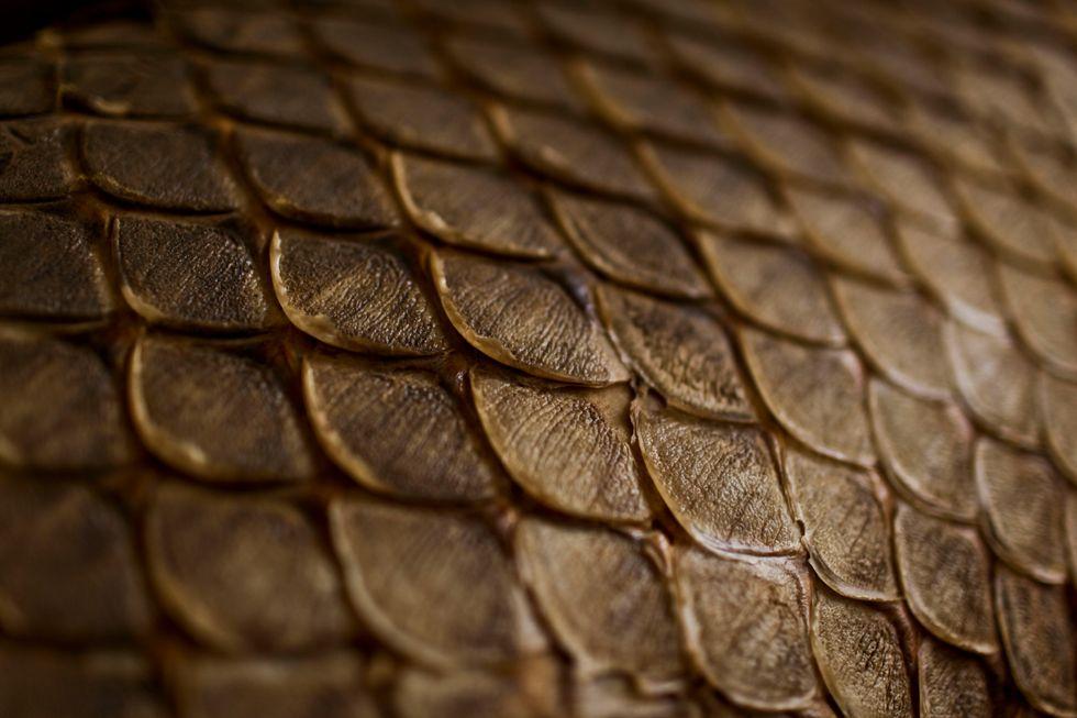 A closeup of fish scales.