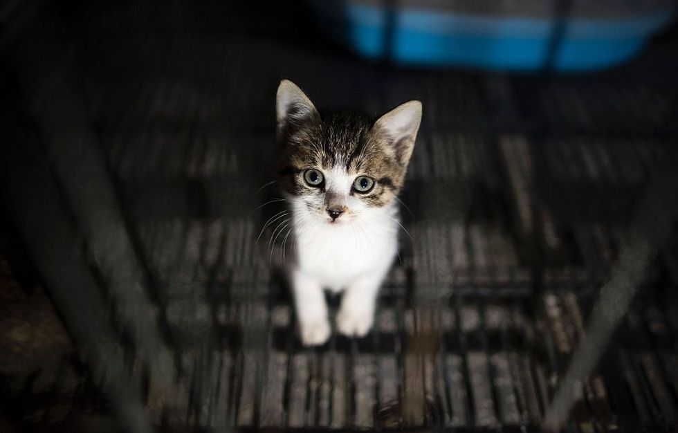 The Household Chemical That Might Be Killing Cats