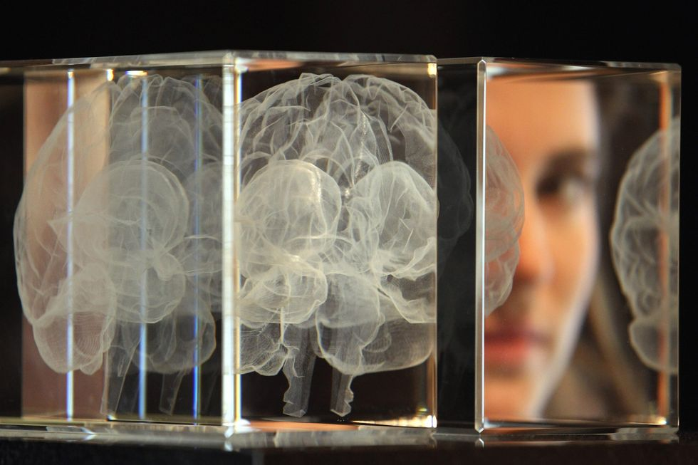 Student looking at slices of the human brain.