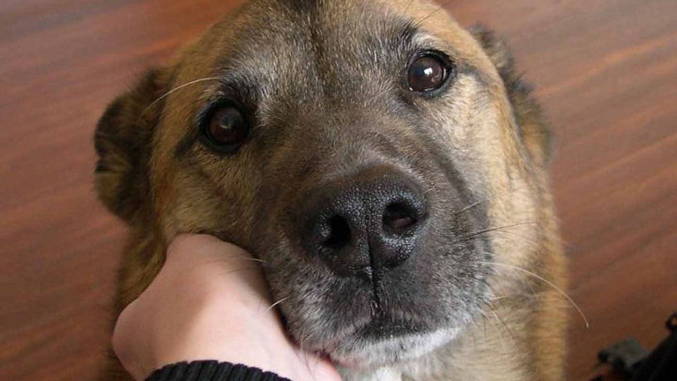 Dogs, cats, other pets: would they eat you if you died
