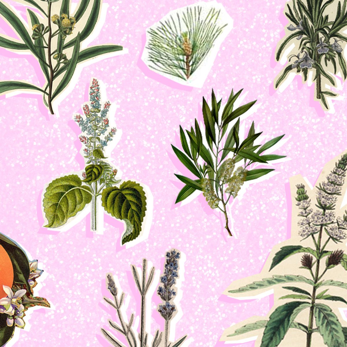 The 10 Actually Essential Essential Oils