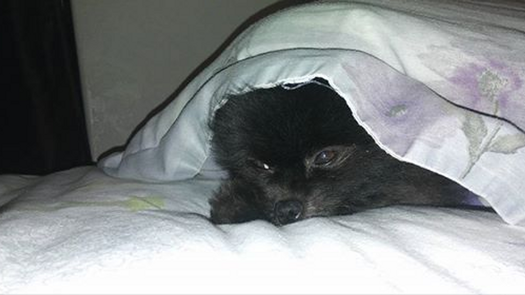 Raven Machie- Ranger under the covers