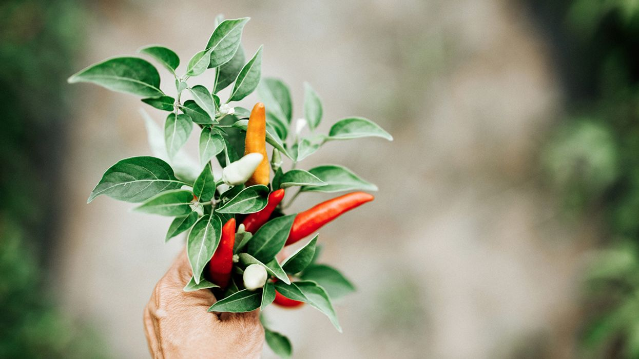 7 Fall Spices You Can Grow at Home