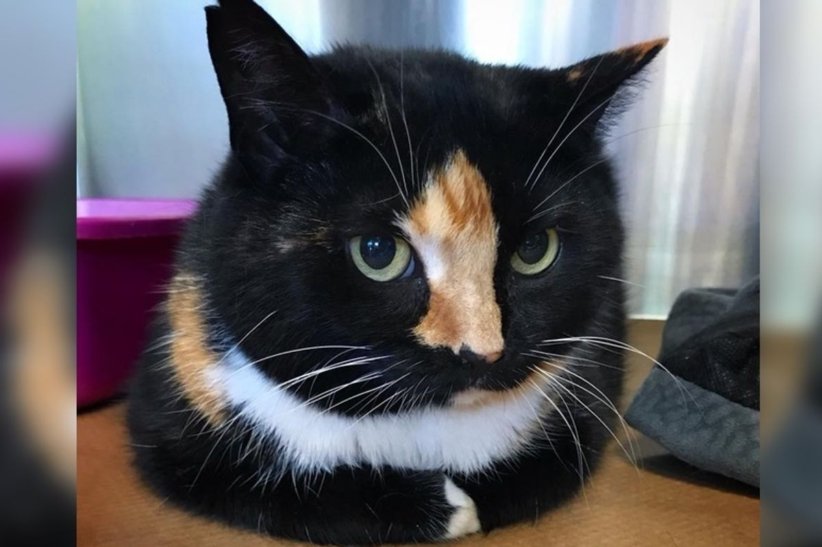 Cat Taken in to Be Euthanized But Vet Refused and Saved Her Life Instead