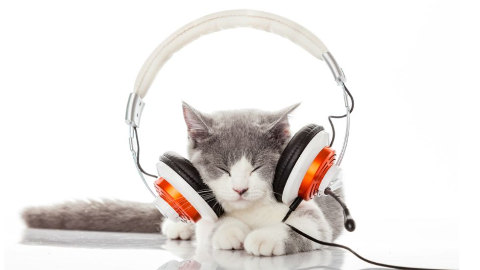 Music Made for Cats Appeals to Special Feline Frequencies