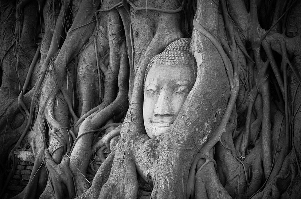 Buddhism and the Brain: Mindfulness in Modern Times