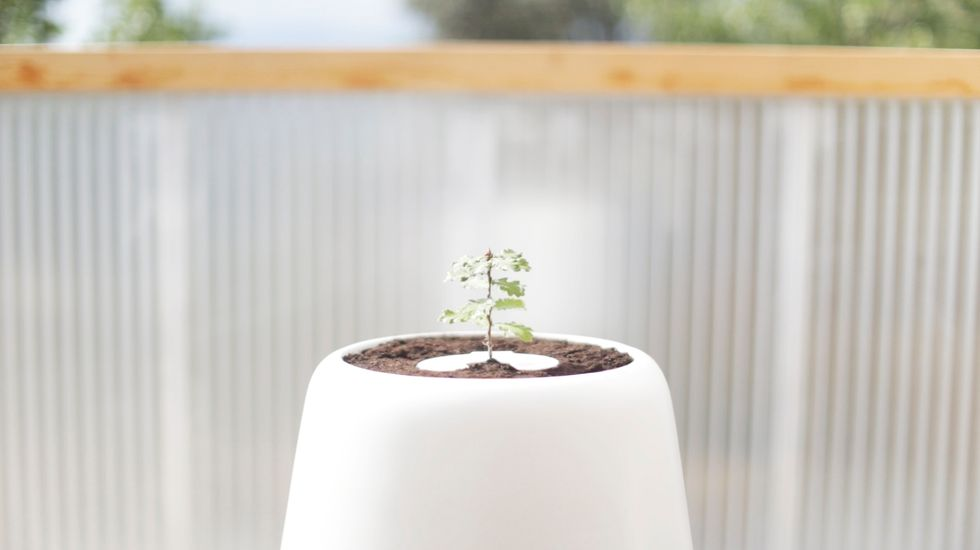 The Bios Incube Lets Loved Ones Live on as a Tree