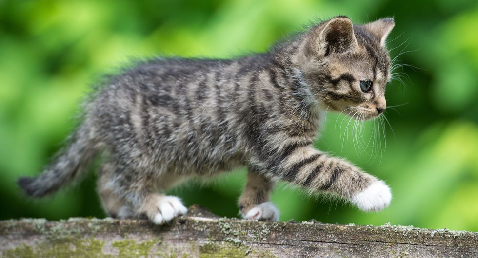 Science: Look At These Cute Puppies and Kittens to Boost Your Productivity