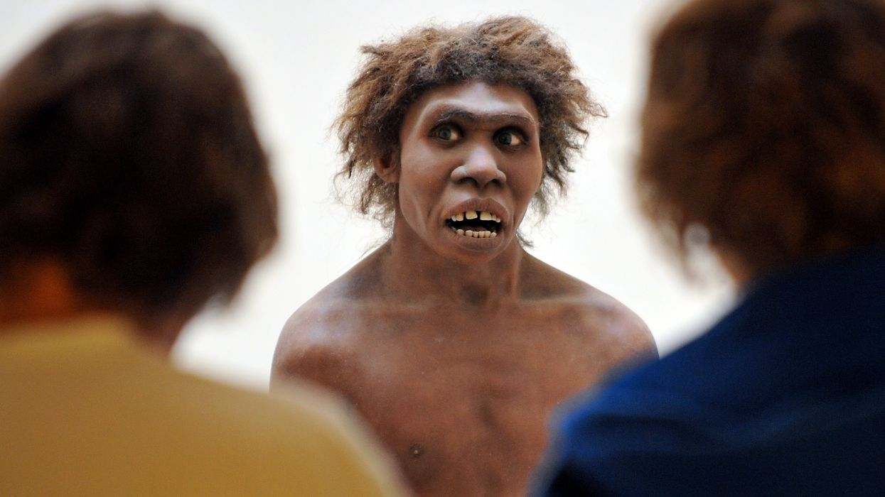What Killed off the Neanderthals? You Might Not Like the Answer