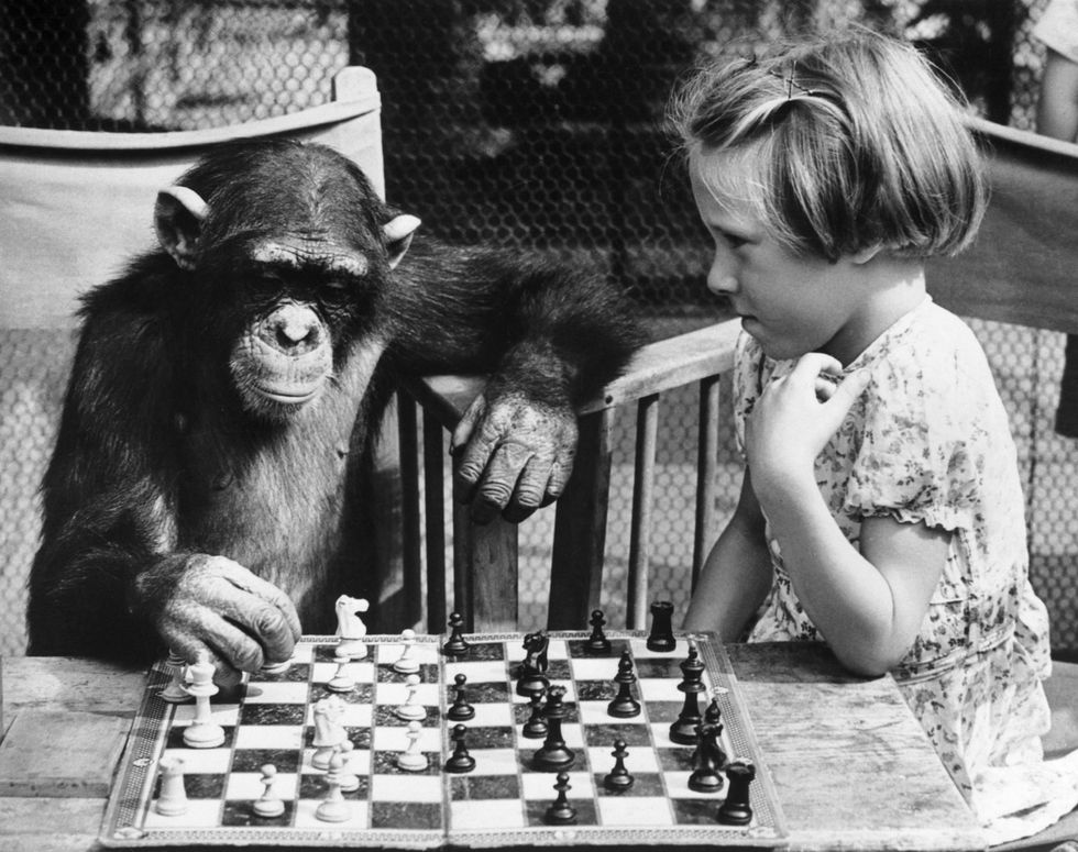 Chimp playing chess with a child.