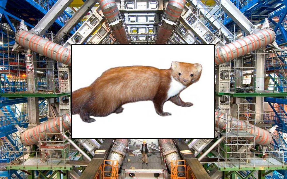 Weasel and Large Hadron Collider
