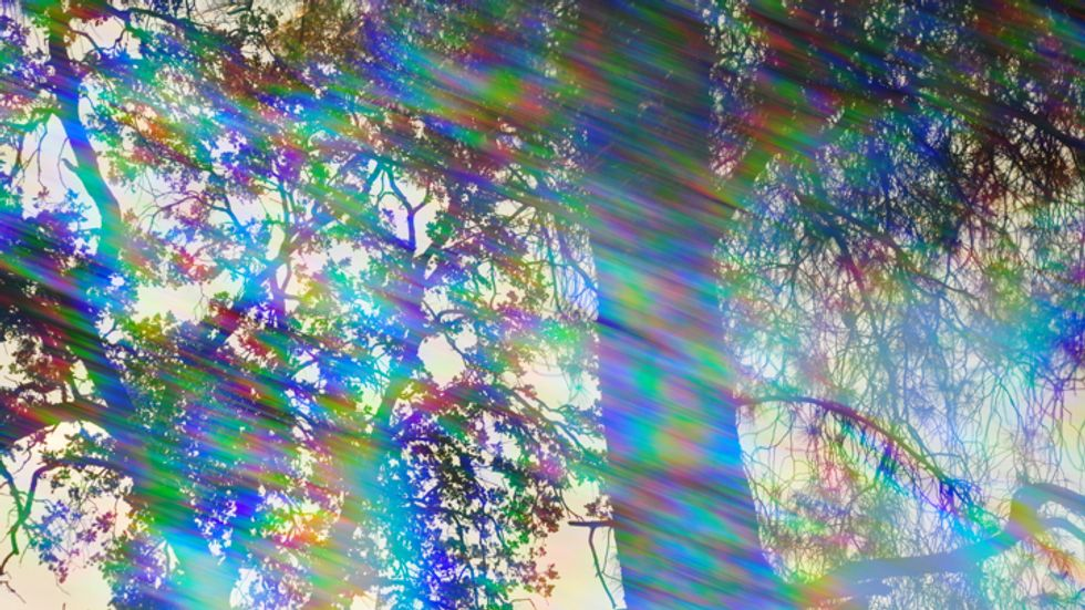 A prismatic forest