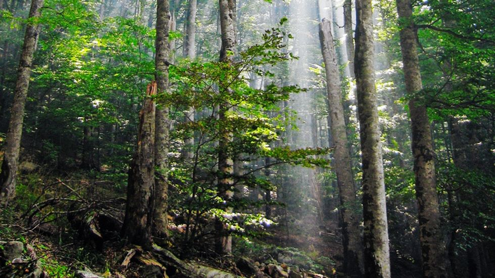 """""""Forest Bathing"""": Stress-Reducer, Immune-Booster, and Artistic Inspiration"""