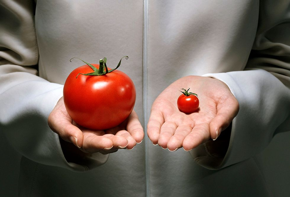 A researcher comparing an oversized tomato with a very small one.