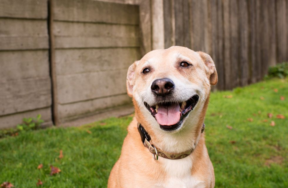 Rex is a labrador mix, and a certified efficiency genius.