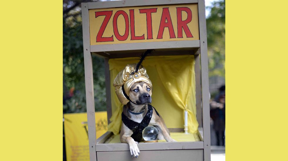 A dog dressed as a Zoltar fortune telling machine participates in the 23rd Annual Tompkins Square Halloween Dog Parade in New York City. (Image credit: TIMOTHY CLARY/AFP/Getty Images)