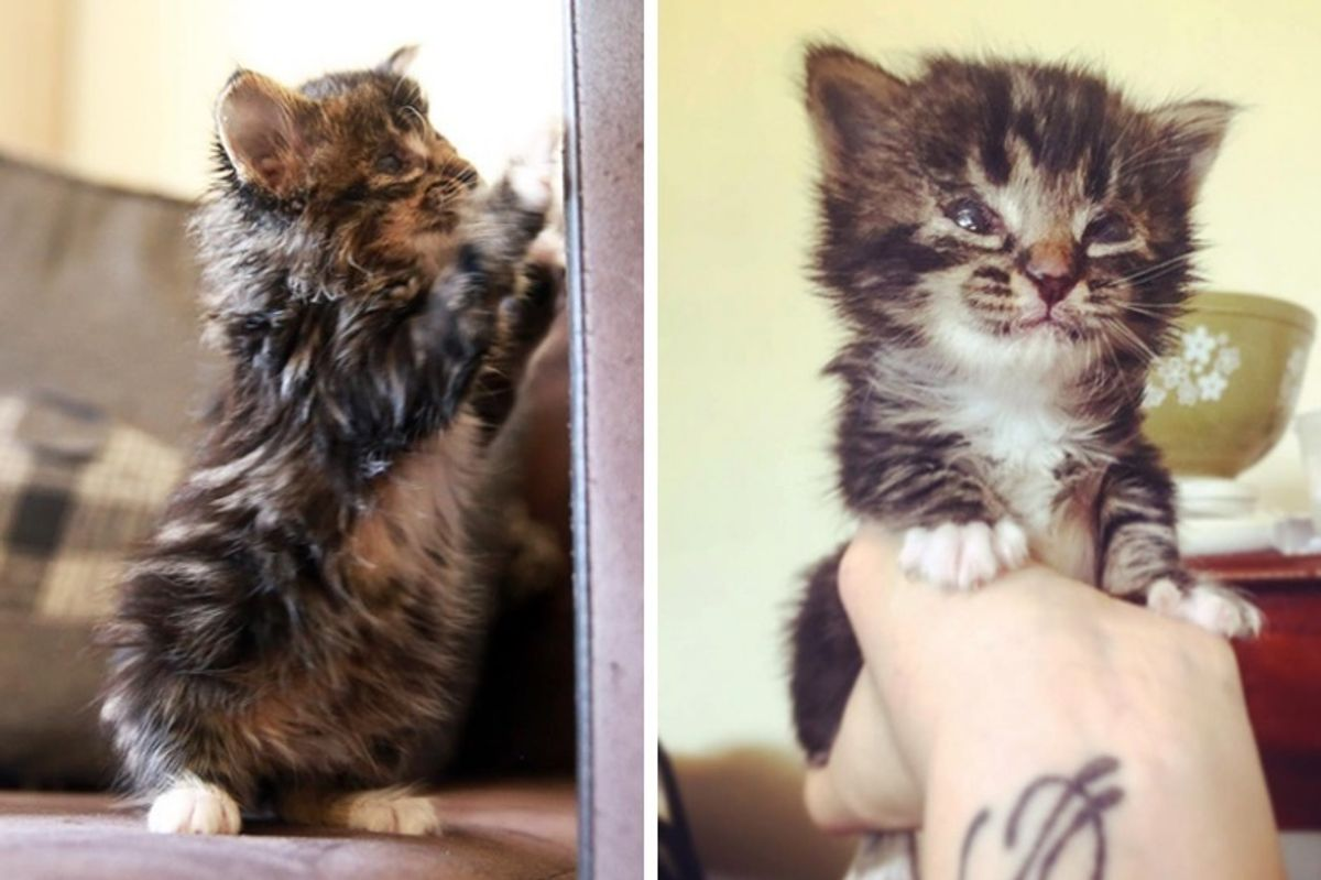 Kitten Born Blind Proves to Those Who Didn't Believe in Her, She Can Do Anything Like Other Cats