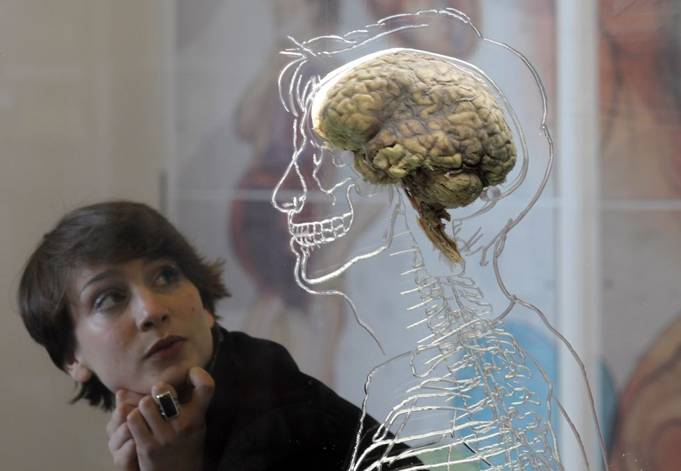Woman looking at a human brain.