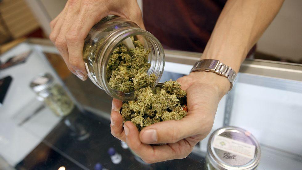 Budtender pours marijuana from jar