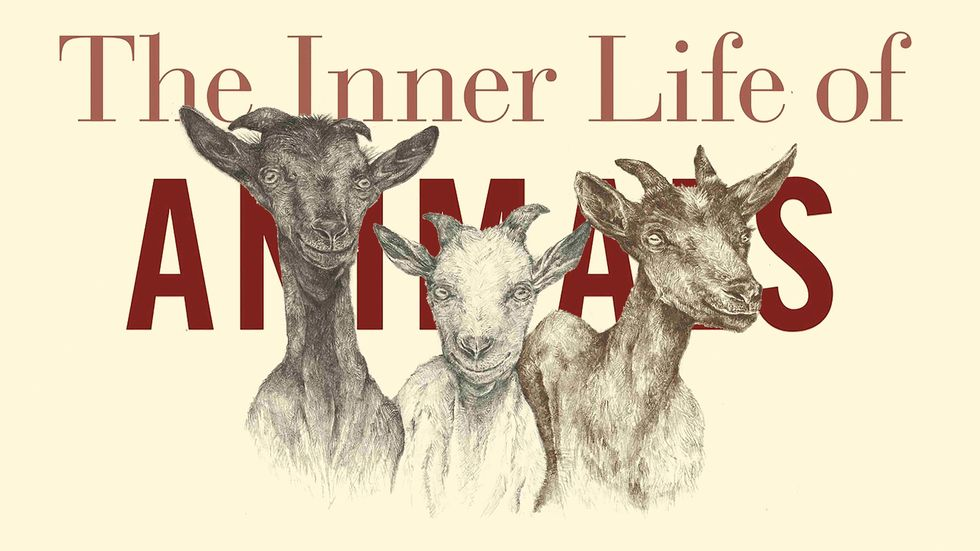 """From """"The Inner Life of Animals"""", by Peter Wohlleben"""