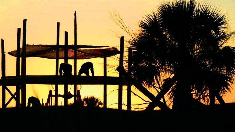 Chimps enjoy the sunset