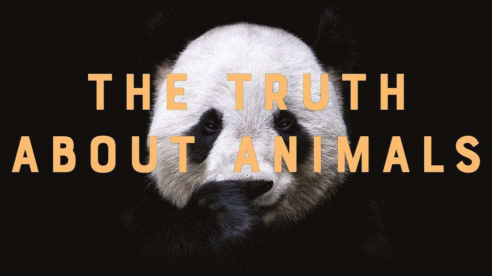 Cover image of 'The Truth About Animals' by Lucy Cooke.