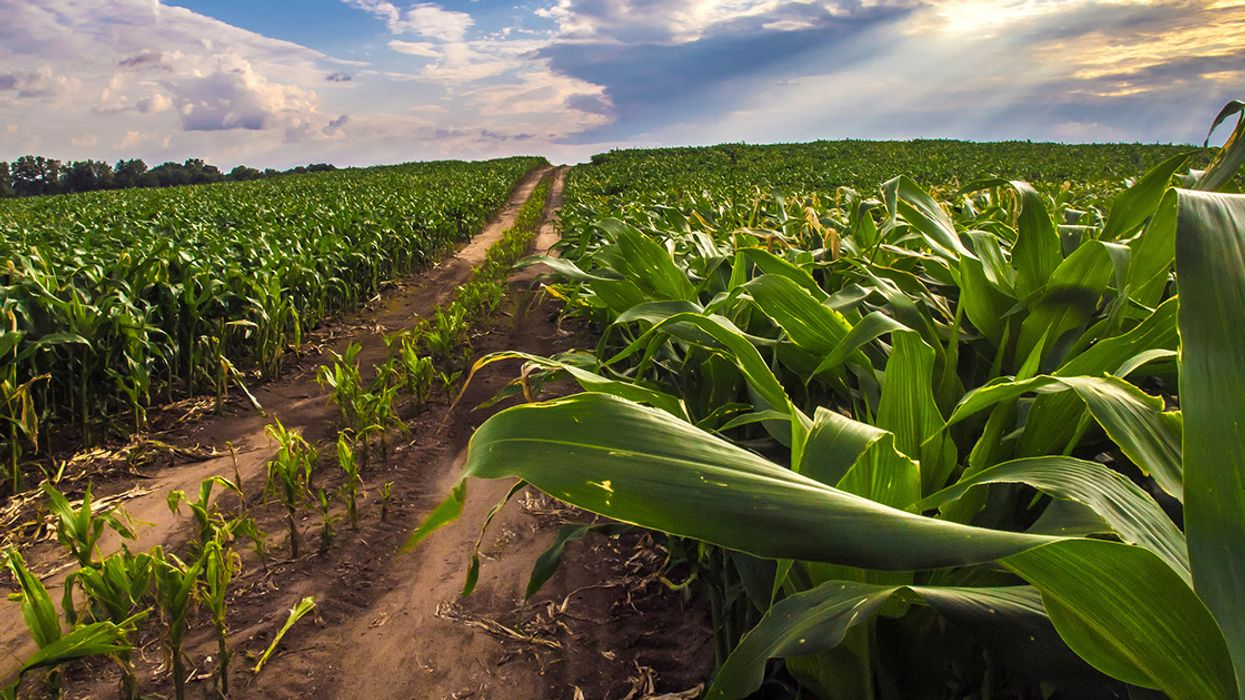 Rise in Insect Pests Under Climate Change to Hit Crop Yields, Study Says
