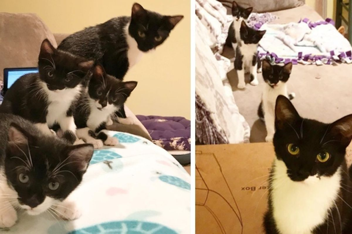 Cat Finds Family to Help Raise Her Kittens Who All Share Her Half-Mustache