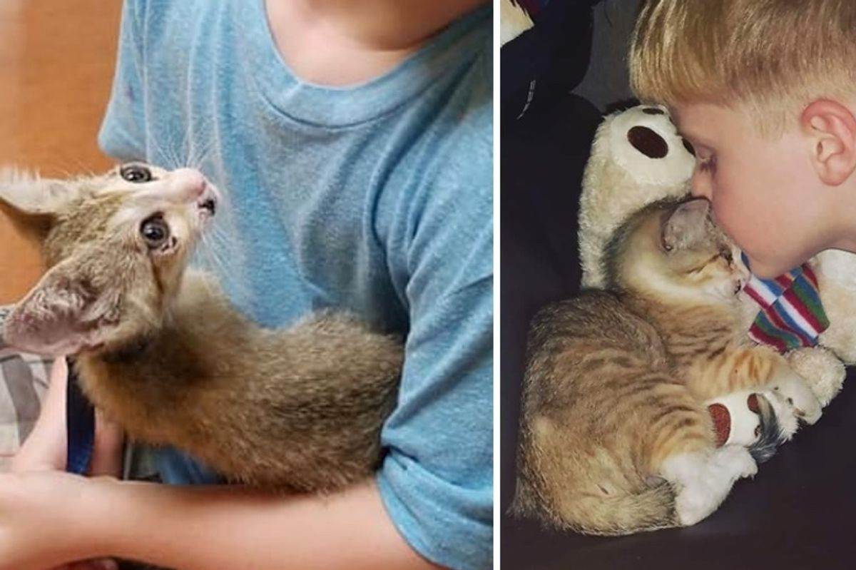 Family Saves Kitten Trapped in Heavy Traffic, the Kitty Holds onto Them and Won't Let Go
