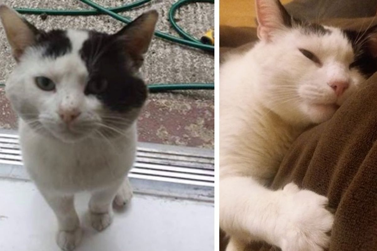 Cat Shows Up on Doorstep After Family Moved In, and Changes Their Lives